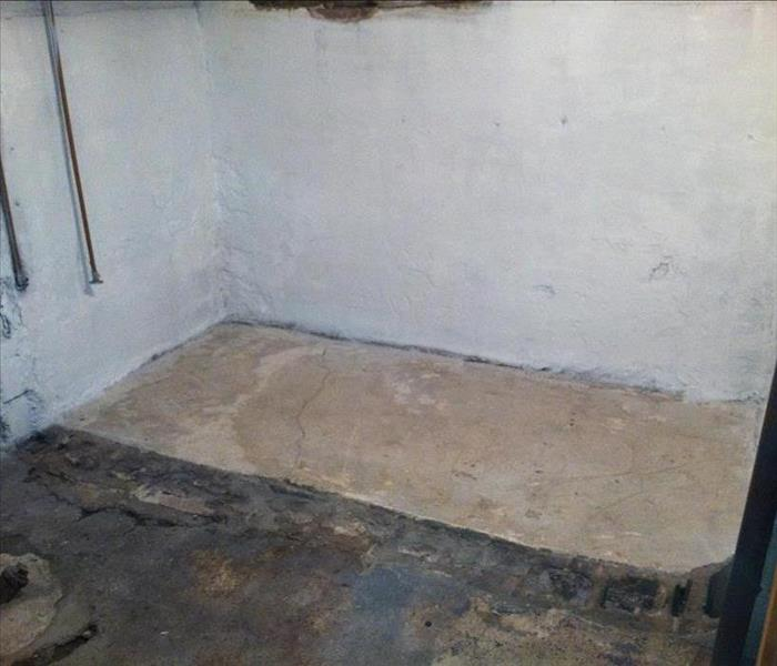 Mold Remediation in Haslett, MI Basement After