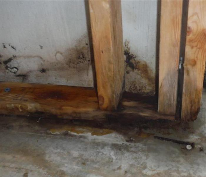 Mold Remediation Does your East Lansing home have a mold problem?