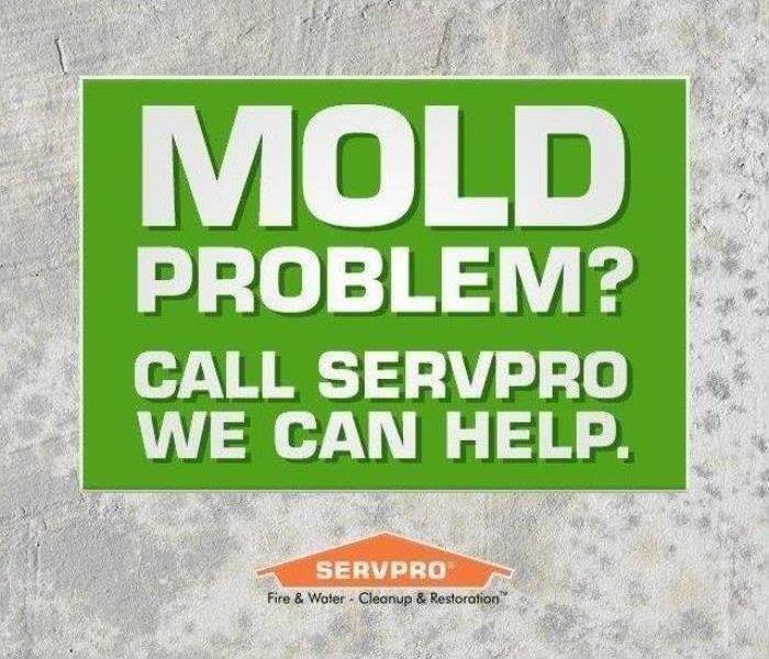 Mold Remediation How to Prevent Mold Growth